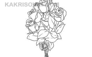 Как нарисовать букет роз карандашом