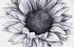 Лучшие рисунки цветов для срисовки