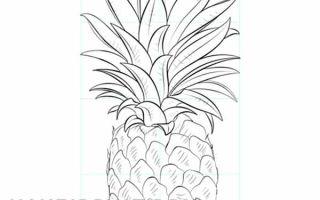 Как нарисовать ананас карандашом
