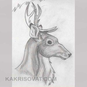 легкие картинки животных для срисовки
