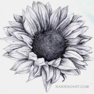 Рисунки цветов для срисовки