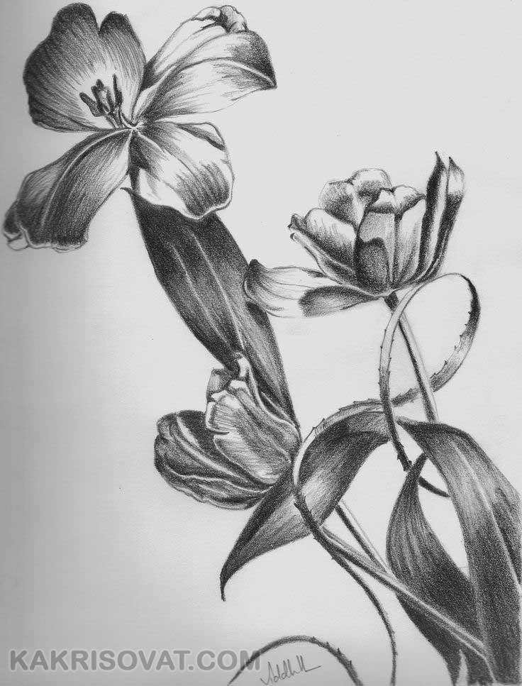 рисунки черно простые белые карандашом