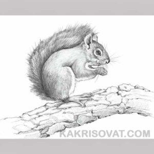 сложные картинки животных для срисовки