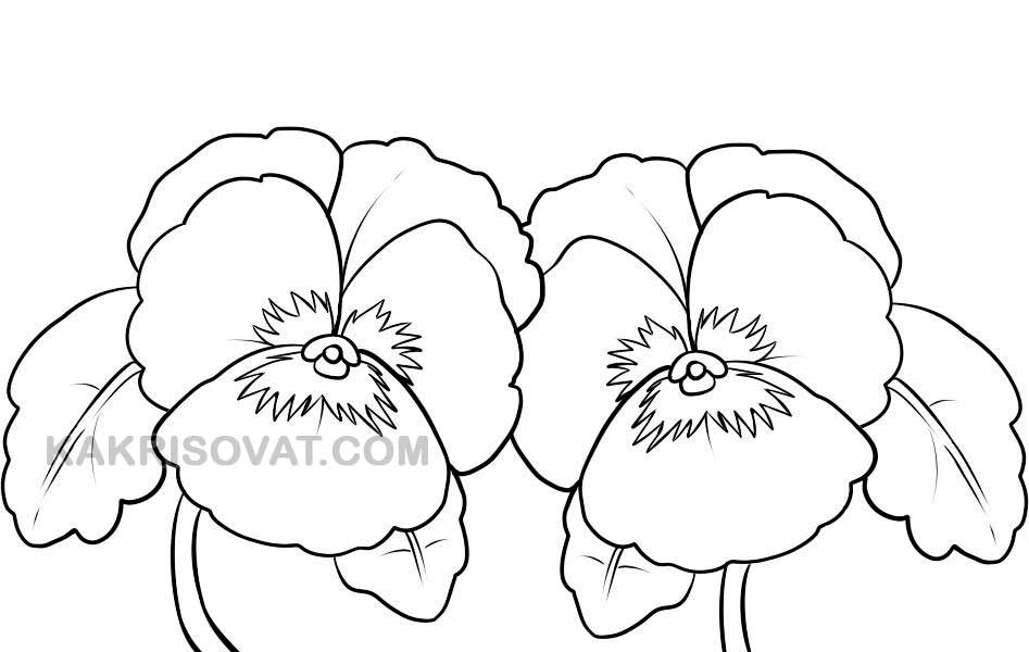 анютины глазки рисунок карандашом