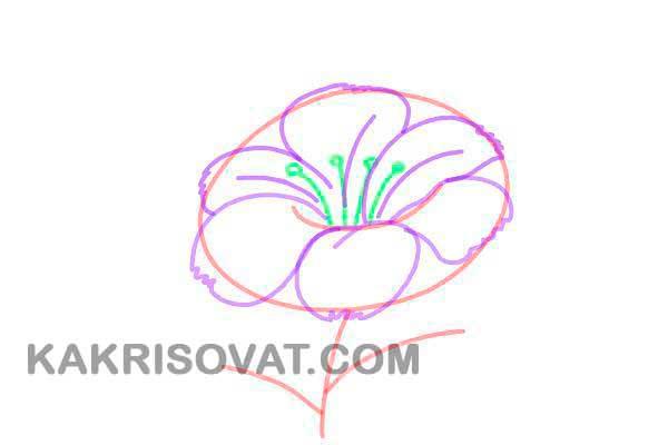 нарисовать аленький цветочек поэтапно карандашом